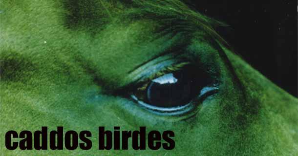 caddos birdes