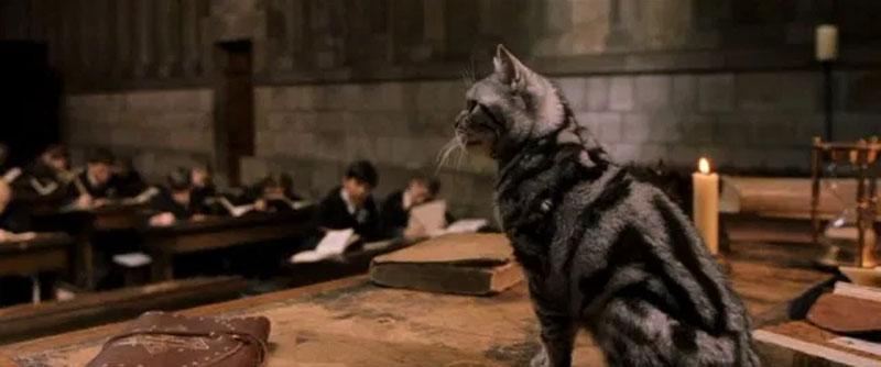 McGranitt in forma di gatto (animagus)
